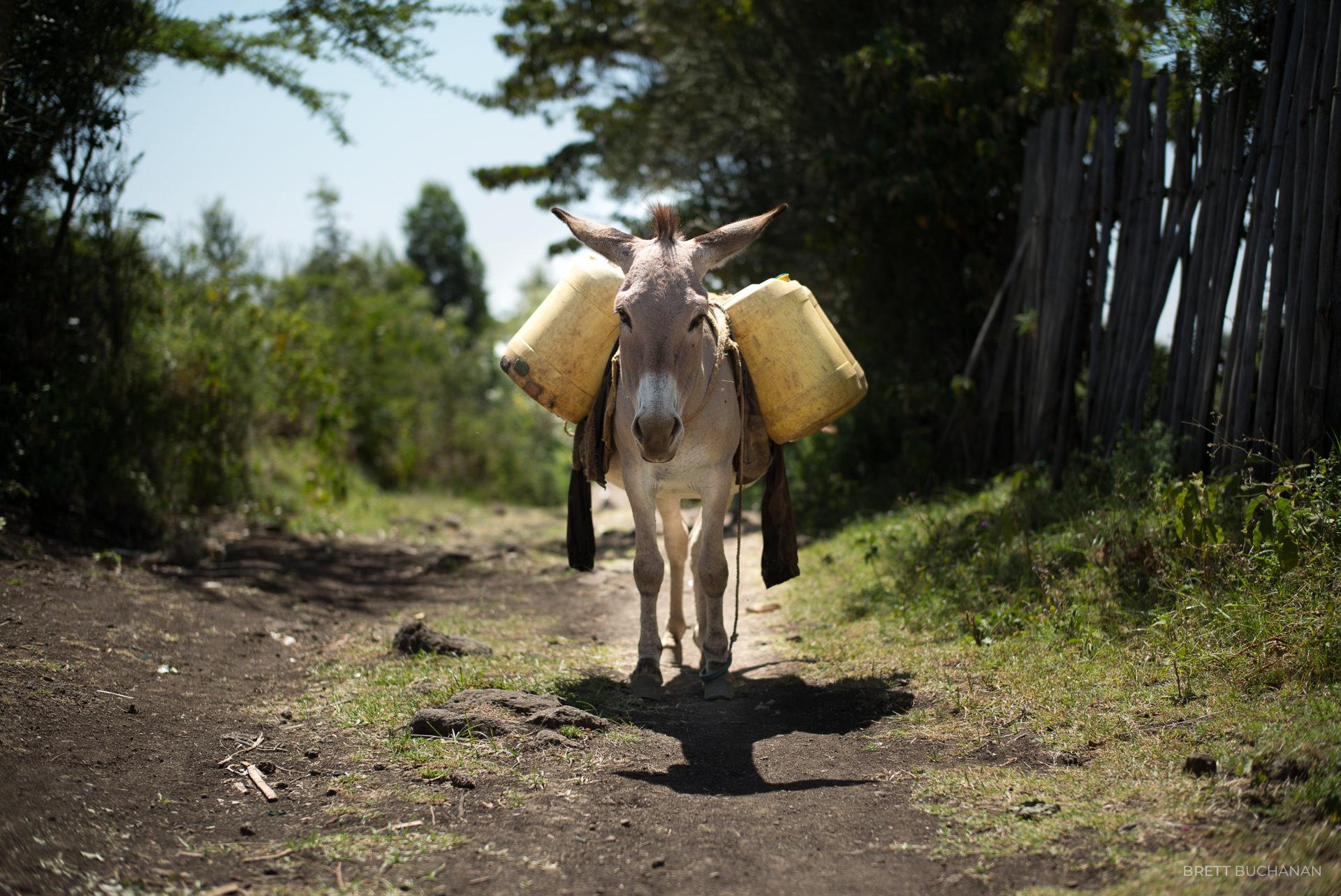Echriria, Kenya